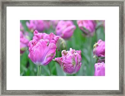 Wrinkled Flowers Framed Print