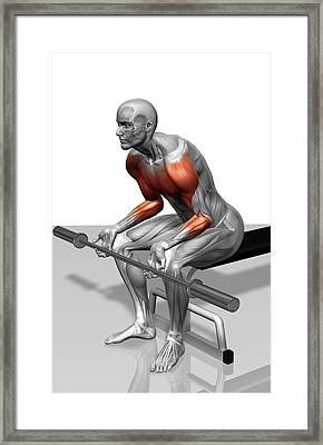 Wrist Curl (part 2 Of 2) Framed Print