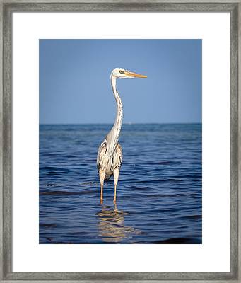 Wurdemann's Heron Framed Print