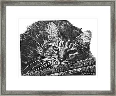 Wyatt Framed Print by Marianne NANA Betts
