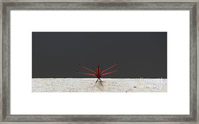 Framed Print featuring the photograph X Wing Dragonfly by Nola Lee Kelsey