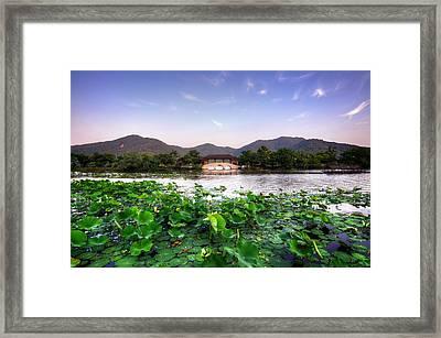 Xianghu - Lotus (xiaoshan) Framed Print by Andy Brandl