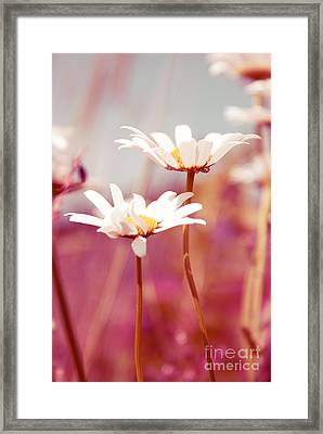 Xposed - S03 Framed Print by Variance Collections