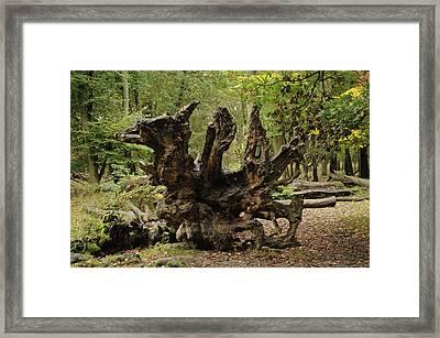 Y Ddraig Pren Framed Print