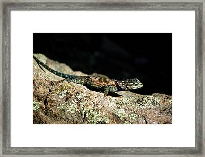 Framed Print featuring the photograph Yarrow's  by Vicki Pelham