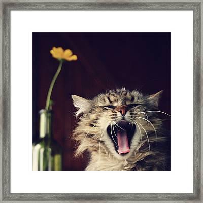 Yawning Cat Framed Print by Photo Hélène