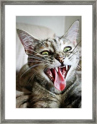 Yawning Kitty Framed Print