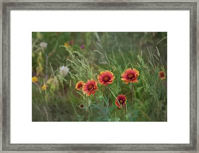 Framed Print featuring the photograph Yawn...more Flowers by John Crothers