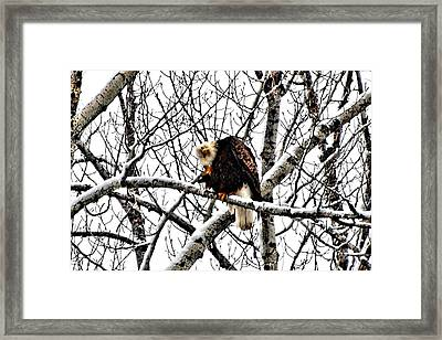 Yeah Baby Framed Print by Don Mann