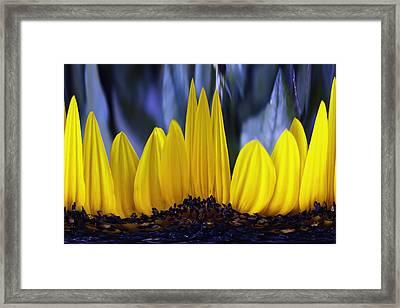 Florida's State Wildflower Framed Print