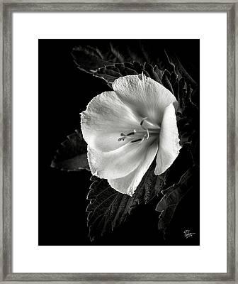 Yellow Alder In Black And White Framed Print