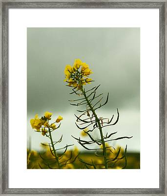 Yellow And Grey Framed Print by Jacqui Collett