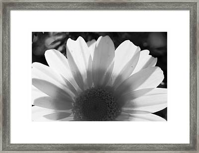 Yellow And White Flower Framed Print