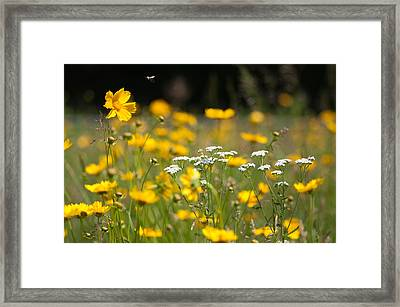 Yellow And White Framed Print by Ron Smith