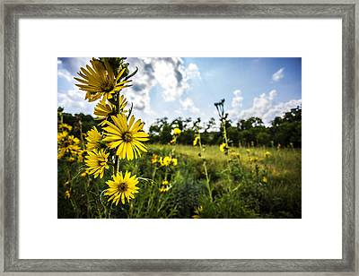 Yellow As The Sun Framed Print by CJ Schmit