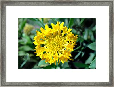 Yellow Beauty Framed Print by Denis Shah