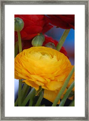 Yellow Beauty Framed Print by Dickon Thompson
