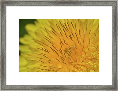 Framed Print featuring the photograph Yellow Beauty by JD Grimes