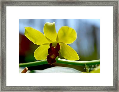 Yellow Beauty Framed Print by Pravine Chester