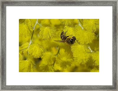 Yellow Bee Framed Print