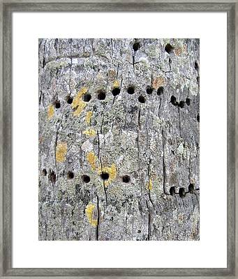 Yellow Bellied Sapsucker And Coconut Palm Framed Print