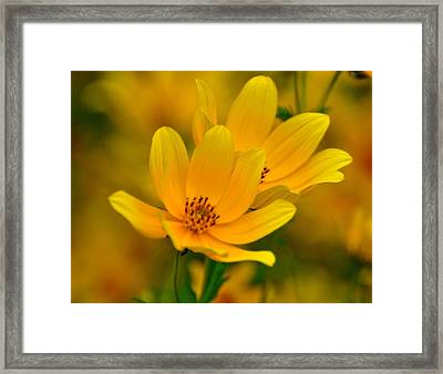 Framed Print featuring the photograph Yellow Blaze by Marty Koch