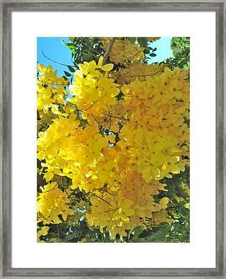 Yellow Blossom Framed Print by Irina Zilbermanas