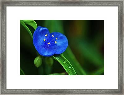 Yellow Blue And Raindrops Framed Print
