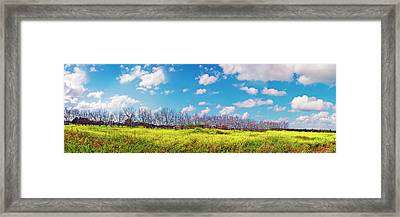 Yellow Blue And Trees Framed Print
