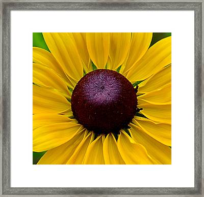 Framed Print featuring the photograph Yellow by Brian Hughes