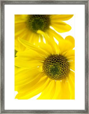Yellow Bright Yellow Framed Print by Brad Rickerby