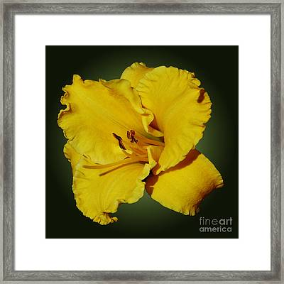 Yellow Brilliance Framed Print by Methune Hively