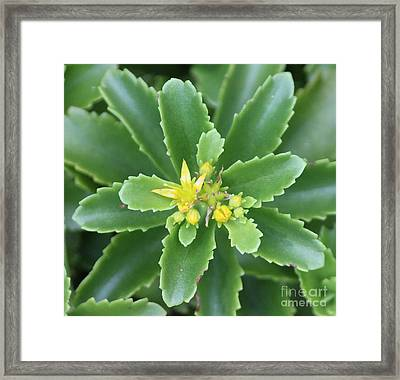 Yellow Buds Framed Print by Marilyn West