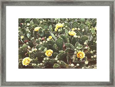 Yellow Cactus Framed Print