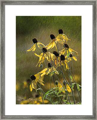 Yellow Coneflowers Framed Print by Bruce Morrison