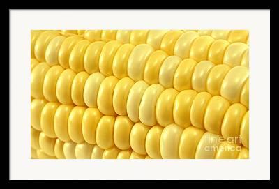 Sweet Corn Farm Framed Prints