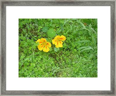 Yellow Couplet Framed Print