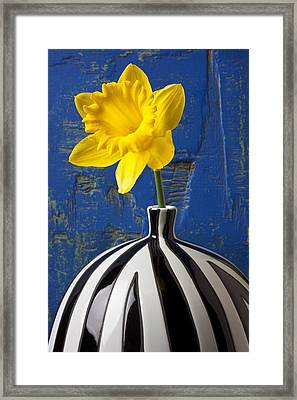 Yellow Daffodil In Striped Vase Framed Print by Garry Gay