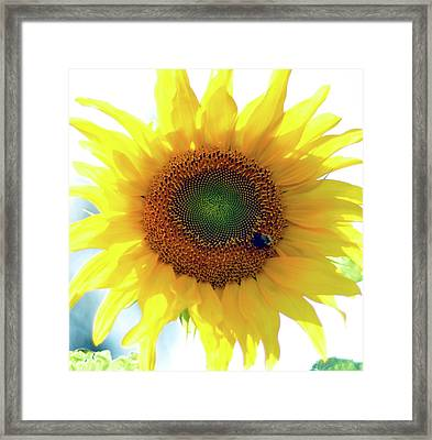 Yellow Day Framed Print