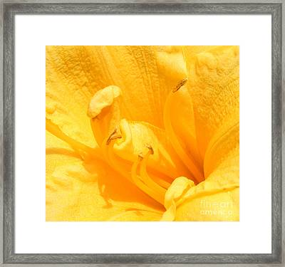Framed Print featuring the photograph Yellow Day Lily by Michael Waters