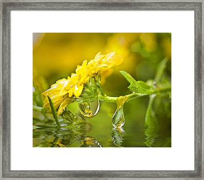 Yellow Drop Framed Print by Trudy Wilkerson