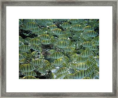 Yellow Everywhere Framed Print by Federica Grassi