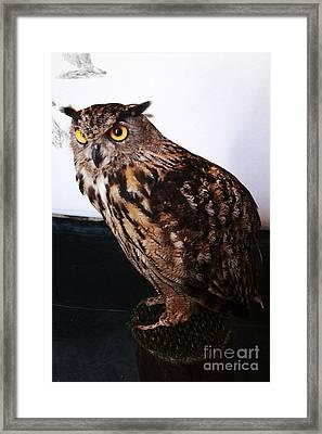 Yellow-eyed Owl Side Framed Print