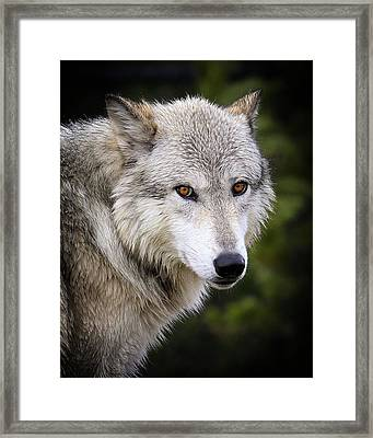 Framed Print featuring the photograph Yellow Eyes by Steve McKinzie