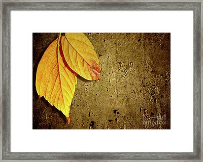 Yellow Fall Leafs Framed Print by Carlos Caetano