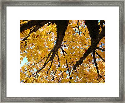 Yellow Fall Trees Prints Autumn Leaves Framed Print by Baslee Troutman