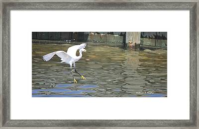 Yellow Feet Framed Print