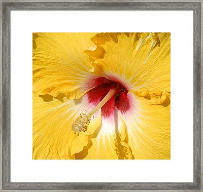 Framed Print featuring the photograph Yellow Fellow by Cindy Manero