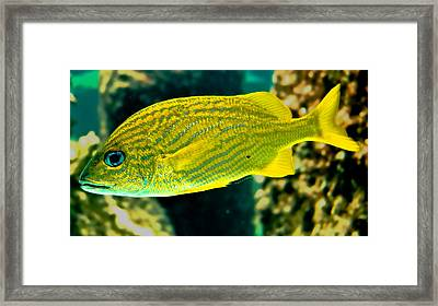 Yellow Fellow Framed Print by DigiArt Diaries by Vicky B Fuller