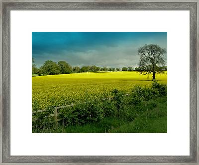 Yellow Field Framed Print by Debra Collins